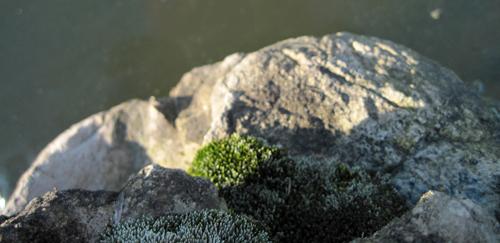 landscape 1 blog