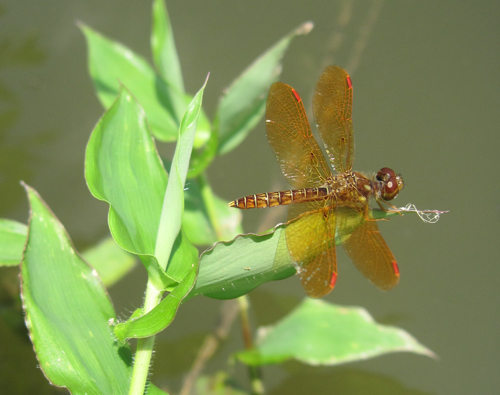 dragon fly blog