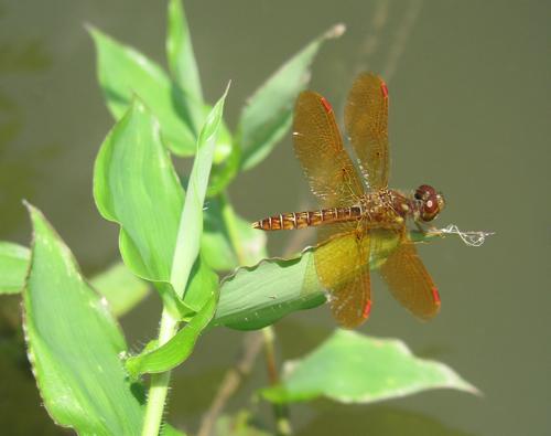 dragon fly blog
