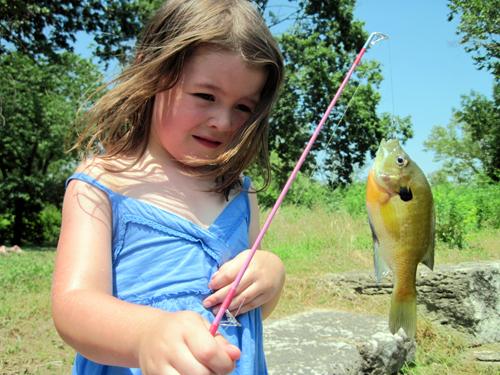 sunfish blog