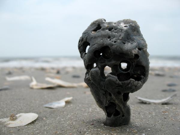 oyster shell garden